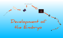 Embryo Development in Animals