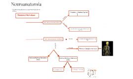 Sistema Nervioso- ivu
