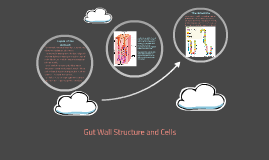 Gut Wall Structure and Cells