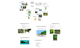 Overview of Plants Mr. Chipps