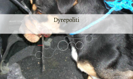 Dyrepoliti