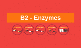 Copy of Copy of B2 - Enzymes
