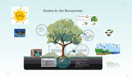 Cycles in the Ecosystem