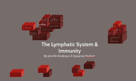 The Lymphatic System & Immunity