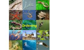 Thema 4: Ordening