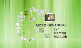 Copy of MICRO-ORGANISMS