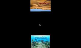 Copy of Brachiopoda - Priapulida