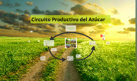 Copy of Circuito Productivo del Azucar