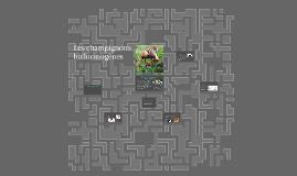Les champignons halucygenes