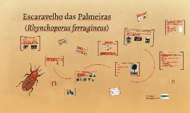 Escavelho das Palmeiras (Rhynchoporus ferrugineus)