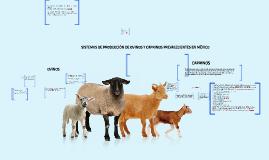 Copy of SISTEMAS DE PRODUCCIÓN DE OVINOS Y CAPRINOS PREVALECIENTES E
