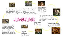 Life cycle of a jaguar