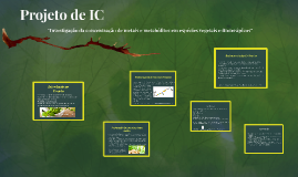 Projeto de IC