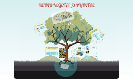 Copy of REINO VEGETAL O PLANTAE