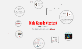 male gonads (tests)