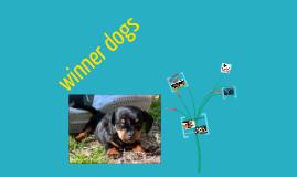 winner dogs