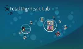 Fetal Pig/Heart Lab