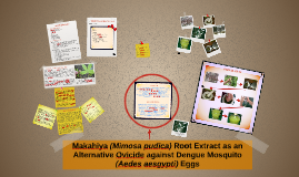 Copy of Makahiya (Mimosa pudica)