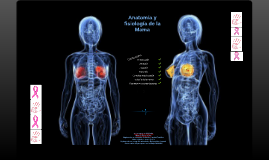 Copy of Anatomía y fisiología de la mama