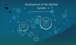 Development of the Skeletal System