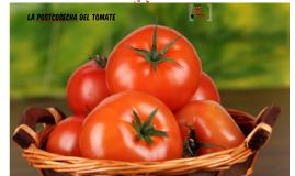 La postcosecha del tomate