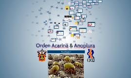 Orden Acarina & Anoplura