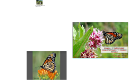 Impacto a la biodiversidad: Caso del glifosato y la mariposa monarca