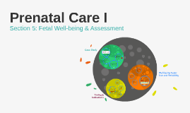 MDWF338: Fetal Well-being & Assessment