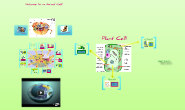 The Organelles of Plant and Animal Cells!