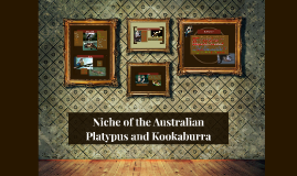 Niches of the Australian  Platypus and Kookaburra
