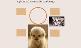 http://animal.rescueshelter.com/Georgia