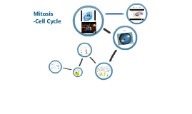 Mitosis (Cell Cycle)