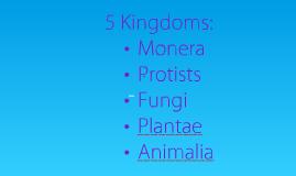 Copy of 5 Kingdoms