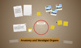 Anatomy and Verstigial Organs
