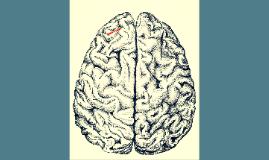 Beyin qaydası