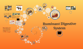 Copy of Copy of Ruminant Digestive System
