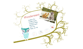 Wonderment - English