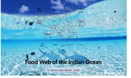 Food Web Of The Indian Ocean