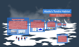 Alaska's Tundra Habitat