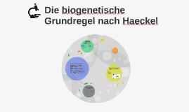 Die biogenetische Grundregel nach Haeckel