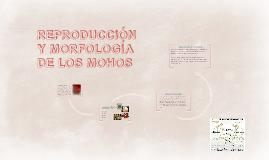 Copy of REPRODUCCIÓN Y MORFOLOGÍA DE LOS MOHOS