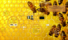 Social Change - Honey bees
