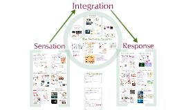 28) AP Bio- Sensation, Integration, Response
