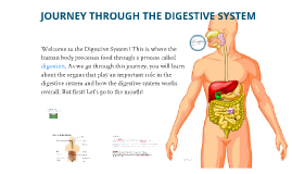 U11 A2 DAL - Journey Through the Digestive System