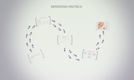 Biosintesis Proteica- 2do Ciclo B