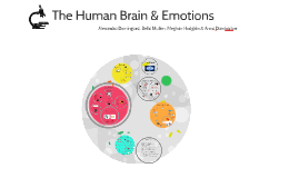 Copy of The Human Brain & Emotions