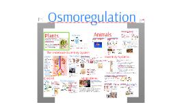 Regulation 3: Osmoregulation