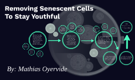 Removing Senescent Cells To Stay Youthful