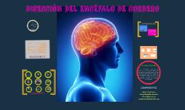 DISECCIÓN DEL ENCÉFALO DE CORDERO