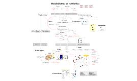 Metabolismo de rumiantes